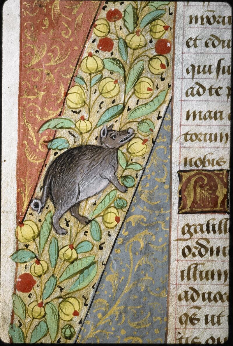 Lyon, Bibl. mun., ms. 6000, f. 162v