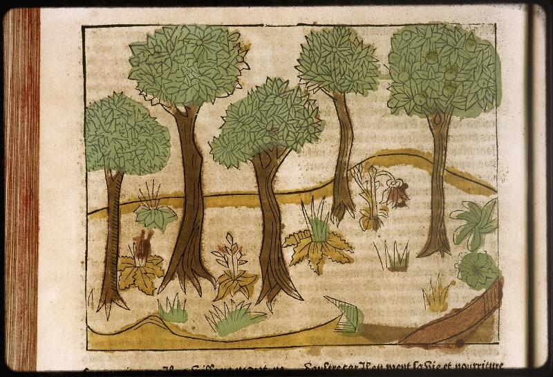 Lyon, Bibl. mun., inc. 0447, f. E 5v