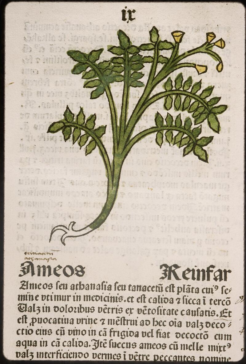Lyon, Bibl. mun., inc. 0960, f. 012
