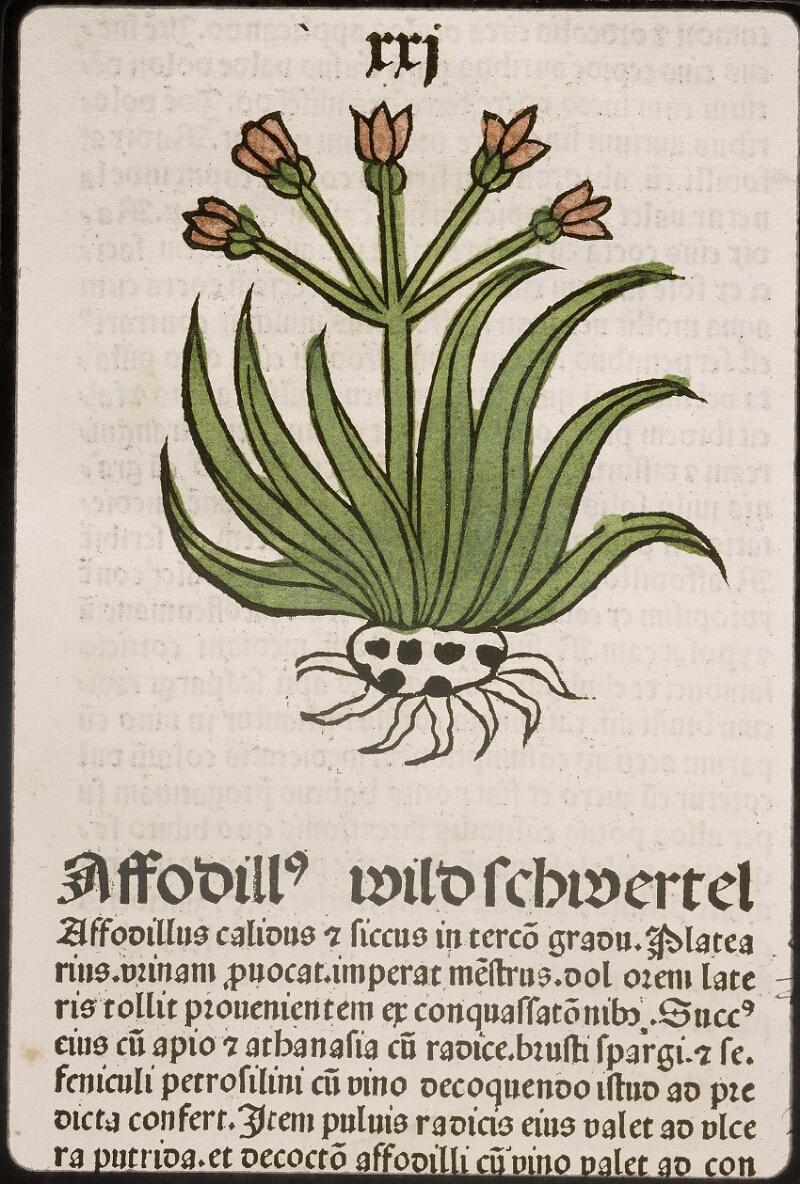 Lyon, Bibl. mun., inc. 0960, f. 024