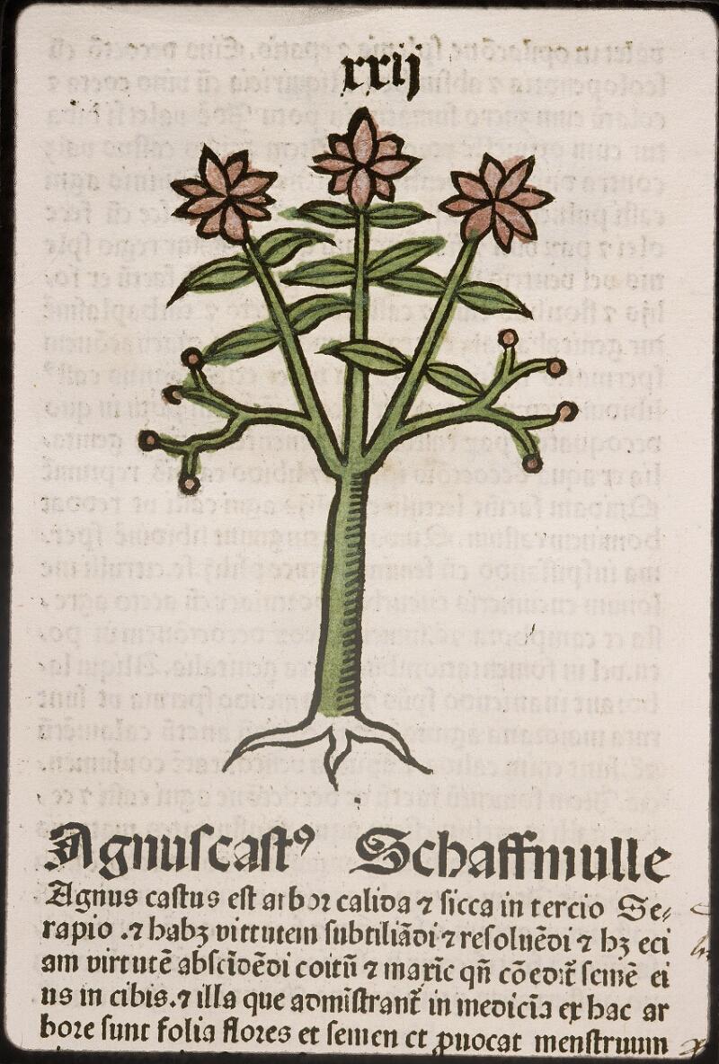 Lyon, Bibl. mun., inc. 0960, f. 025