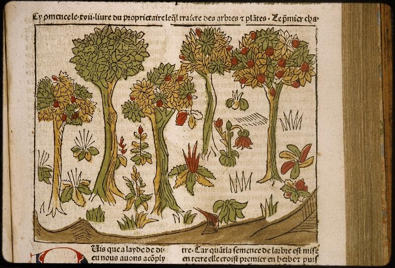 Lyon, Bibl. mun., inc. 1042, f. 234