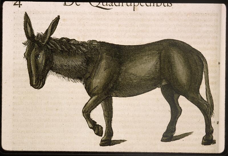 Lyon, Bibl. mun., rés. 031356, p. 0004