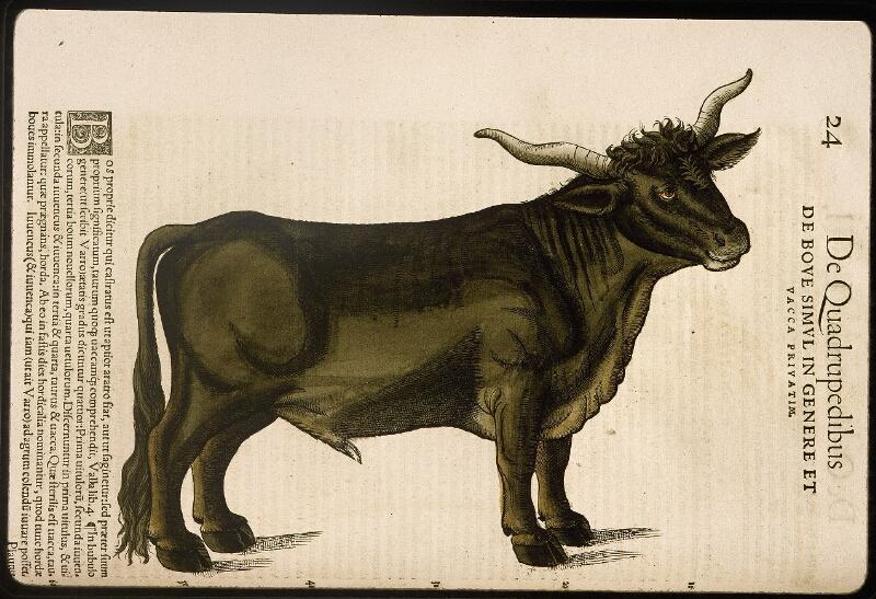 Lyon, Bibl. mun., rés. 031356, p. 0024