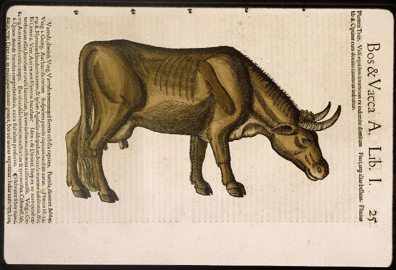 Lyon, Bibl. mun., rés. 031356, p. 0025