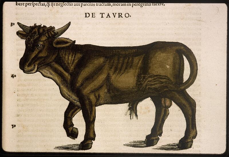 Lyon, Bibl. mun., rés. 031356, p. 0103