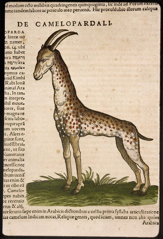Lyon, Bibl. mun., rés. 031356, p. 0160