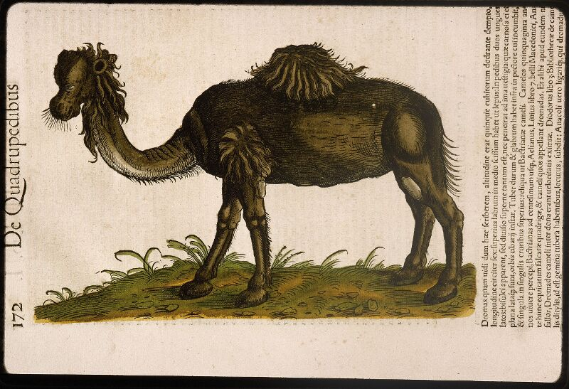 Lyon, Bibl. mun., rés. 031356, p. 0172
