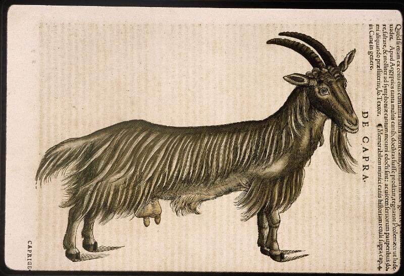 Lyon, Bibl. mun., rés. 031356, p. 0270