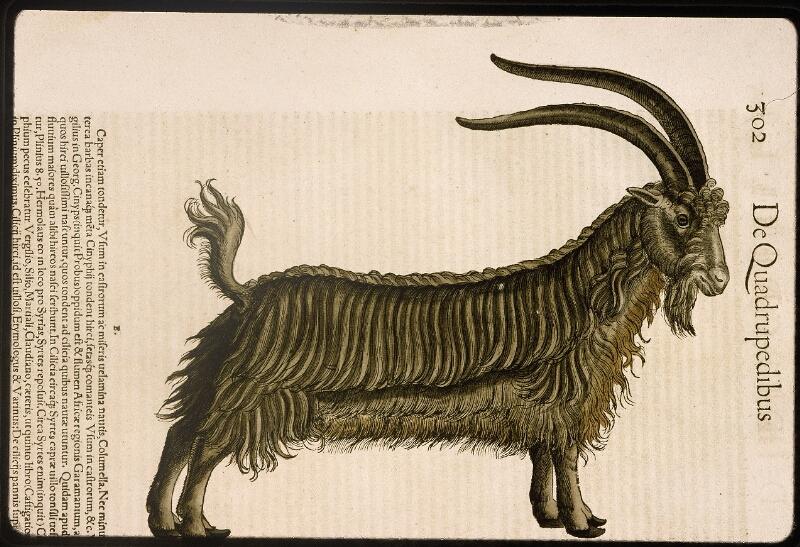Lyon, Bibl. mun., rés. 031356, p. 0302