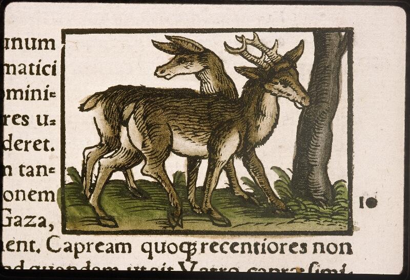 Lyon, Bibl. mun., rés. 031356, p. 0324