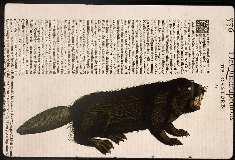 Lyon, Bibl. mun., rés. 031356, p. 0336