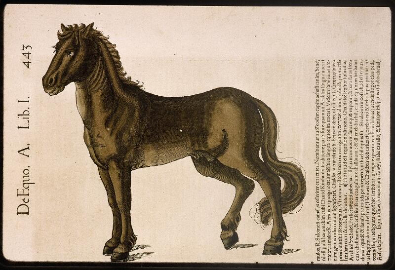 Lyon, Bibl. mun., rés. 031356, p. 0443