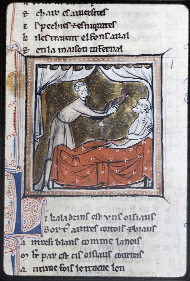 Lyon, Bibl. mun., ms. Palais des Arts 078, f. 036 - vue 2
